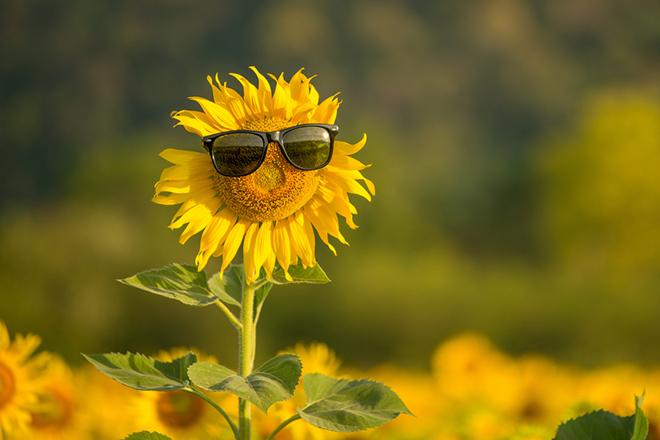 Бүгүн күндүн ысыгы +38 градуска жетет