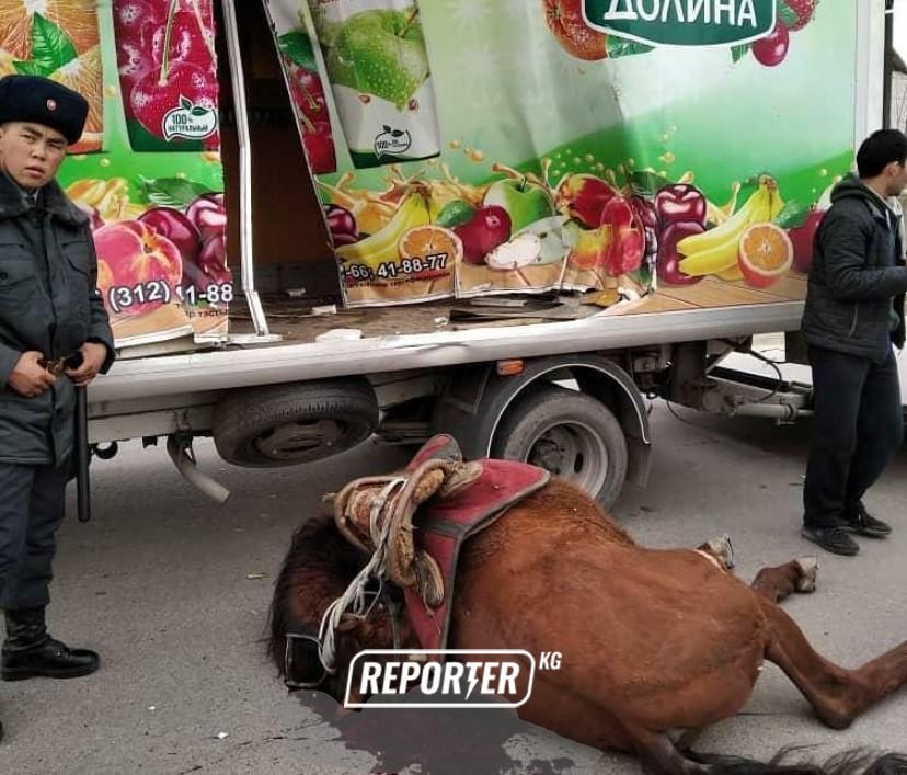 Бишкекте ээсин ала качкан атты автоунаа өлтүрө сүздү — сүрөт, видео