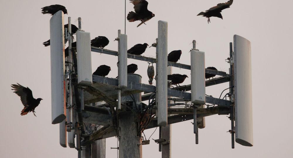 5G. Бишкектеги антеннанын толкундары өлчөндү