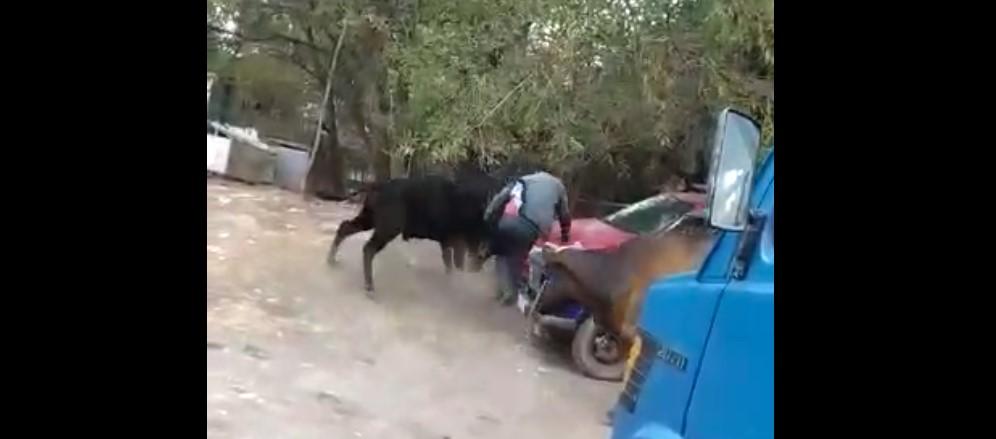 Бошонгон бука базардагы бир нече адамды көмөлөтө сүздү – видео