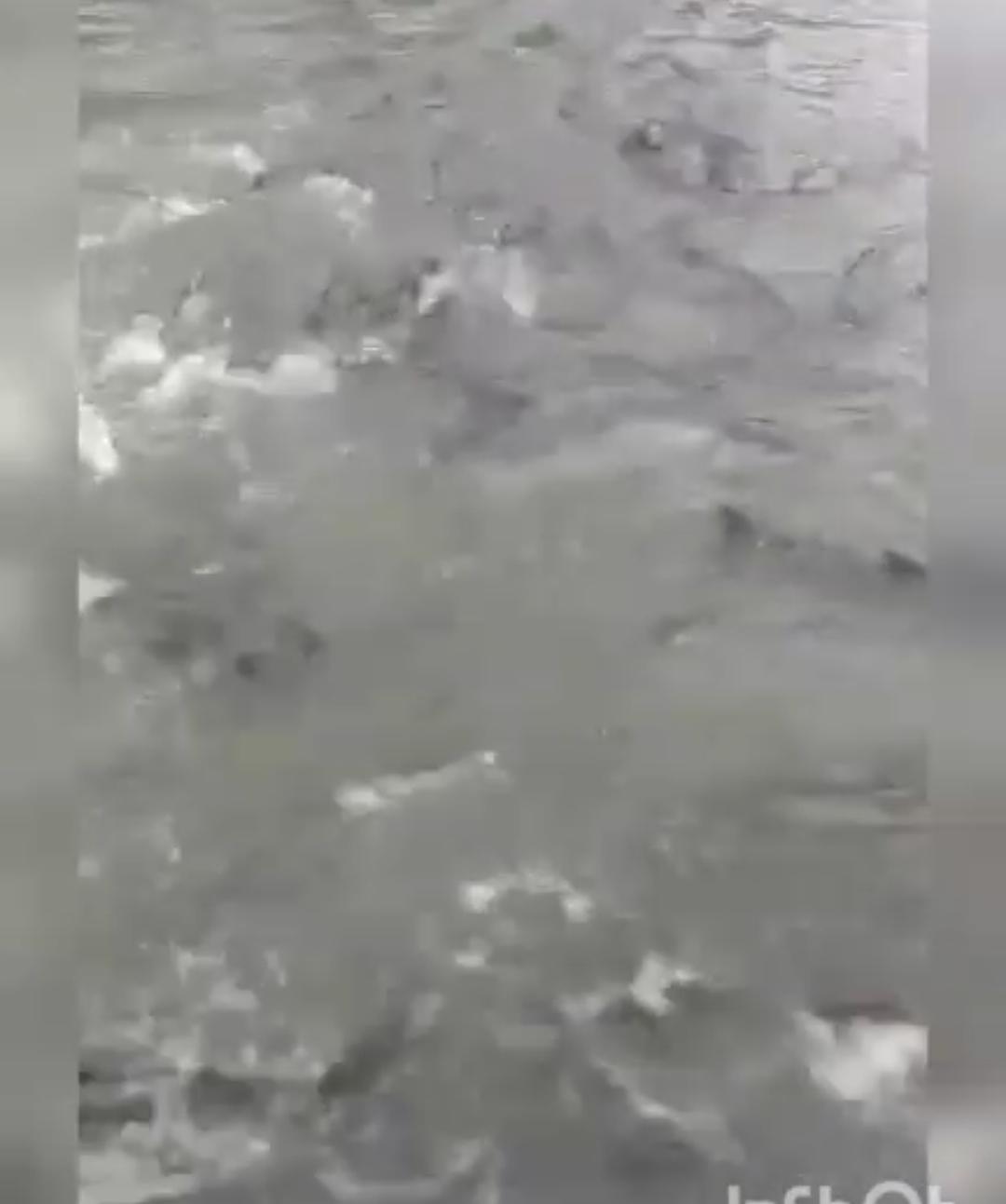 Хабаровскда жаан жаап, көчөнү балык каптады — видео