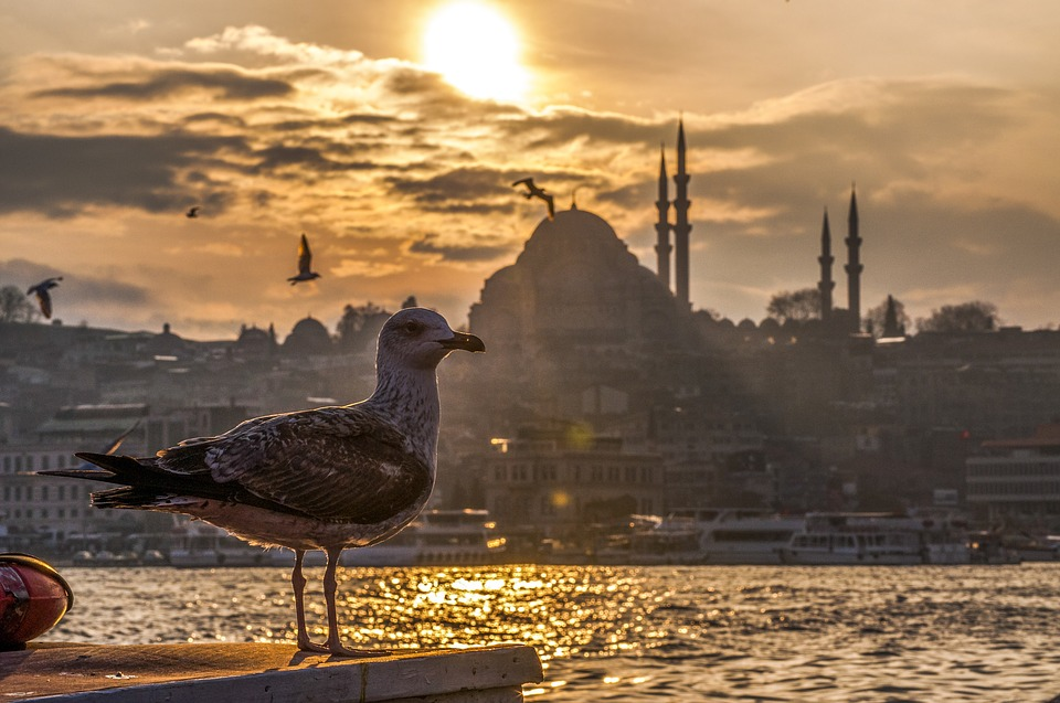 «Манас» аэропорту» Стамбул-Бишкек-Стамбул каттамдарынын санын көбөйтөт