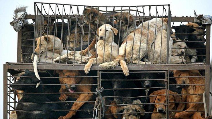 Президент Южной Кореи хочет убрать собачье мясо из меню корейцев